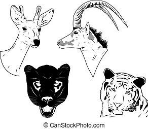 Wilde Tiereköpfe