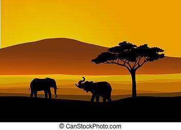 Wildes Leben Afrika