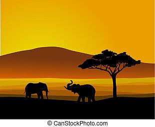 Wildtiere Afrika