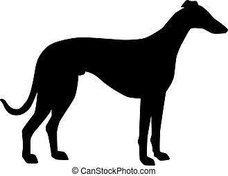 windhund, silhouette