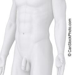 winkel , abbildung, posierend, weißer mann, ansicht