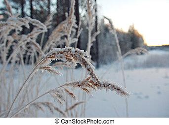 Winterszene .Frozenned blum .