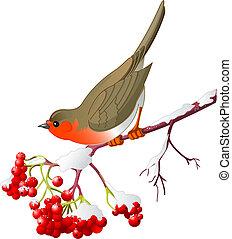 Wintervogel