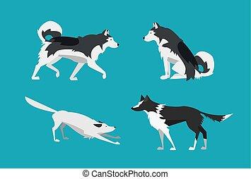 wohnung, satz, illustration., alaskisch malamute, vektor, design., umrandungen, hunden, collie.