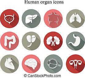 wohnung, satz, vector., icons., menschliche , organe