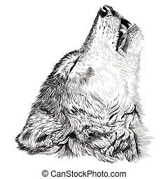 Wolf Howls Sketch.