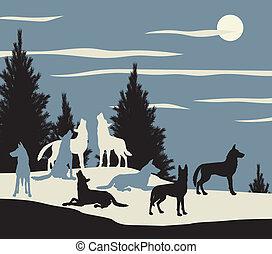 wolf, satz