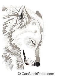 Wolfsgesicht.