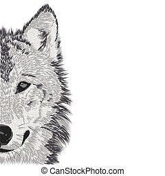 Wolfsmuschel-Sketch