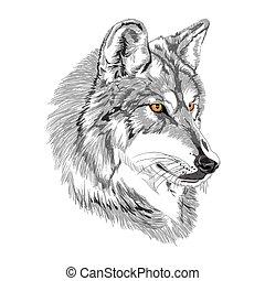 Wolfsmuschel-Sketch.