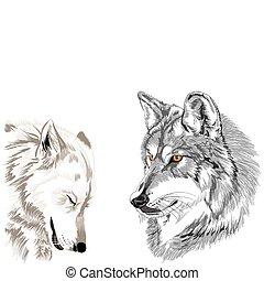 Wolves Muzzles Sketch.