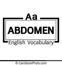 wort, vokabeln, abdomen, abbildung, design, englisches