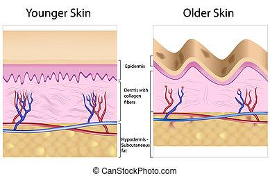 Wrinkled gegen glatte Haut