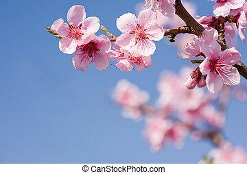 Wunderschöne Frühlingsblumen mit klarem blauen Himmel.