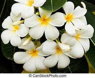 Wunderschöne Frühlingsblumen