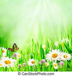 Wunderschöne Frühlingsrollen mit Kamilleblüten