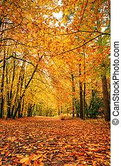 Wunderschöne Herbstwaldszene