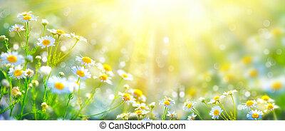 Wunderschöne Naturlandschaft mit blühenden Kamillen in Sonnenstrahlen.
