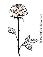 Wunderschöne, rosa Rosenblüte, isoliert im weißen Hintergrund, Vektor Illustration