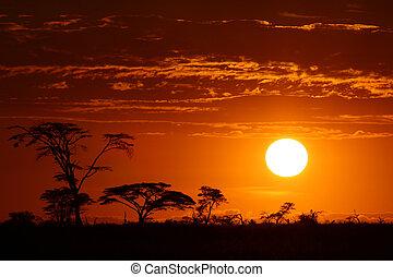 Wunderschöner afrikanischer Safari- Sonnenuntergang