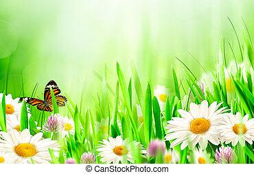 Wunderschöner Frühlingshintergrund mit Kamilleblumen.