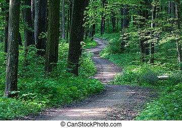 Wunderschöner grüner Wald.
