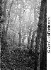 Wunderschöner Herbst fällt die Natur nebliger Waldlandschaft