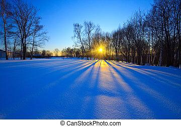 Wunderschöner Sonnenuntergang im Winterwald