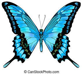 Wunderschöner Vektor isolierter blauer Schmetterling