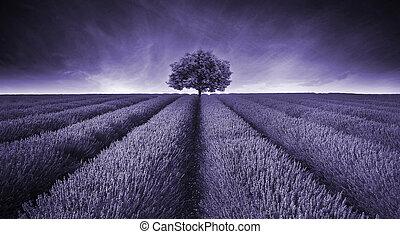 Wunderschönes Bild der Lavendel-Feldlandschaft mit einem Baum in Mauve.