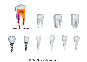 Zähne und Implantate. Isoliert