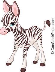 zebra, reizend, fohlen