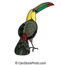 zeichnung, toucan., färbung, schöne , hand-drawn, adults., vektor, buch, drawings., hand, kinder