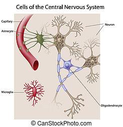 Zellen des Gehirns