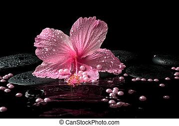 zen, schöne , rosa, delikat, steine, spa, hibiskus, einstellung