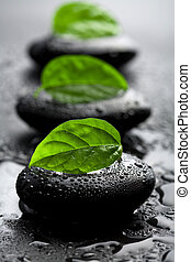 Zen-Steine und Blätter mit Wassertropfen