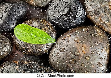 Zen-Steine und Frischpflanzen mit Wassertropfen.