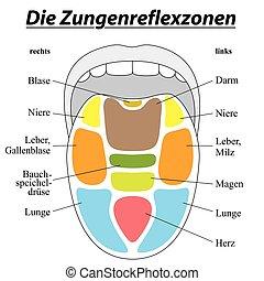 Zungenreflexologie Deutsch