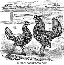 Zwei Bantam-Hähnchen-Griff