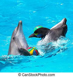 Zwei Delfine spielen im blauen Wasser mit Bällen