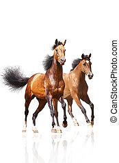 Zwei Pferde auf weiß