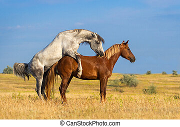 Zwei Pferdekupplungen.