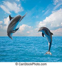 Zwei springende Delfine.
