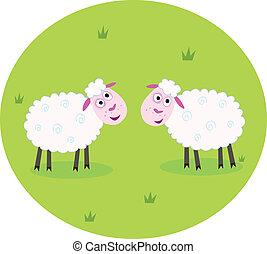 Zwei weiße Schafe
