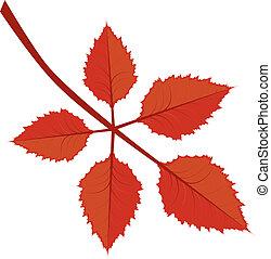 Zweig mit Herbstlaub.
